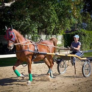 American Saddlebred, driving, horse, lesson, bennett farms, cart