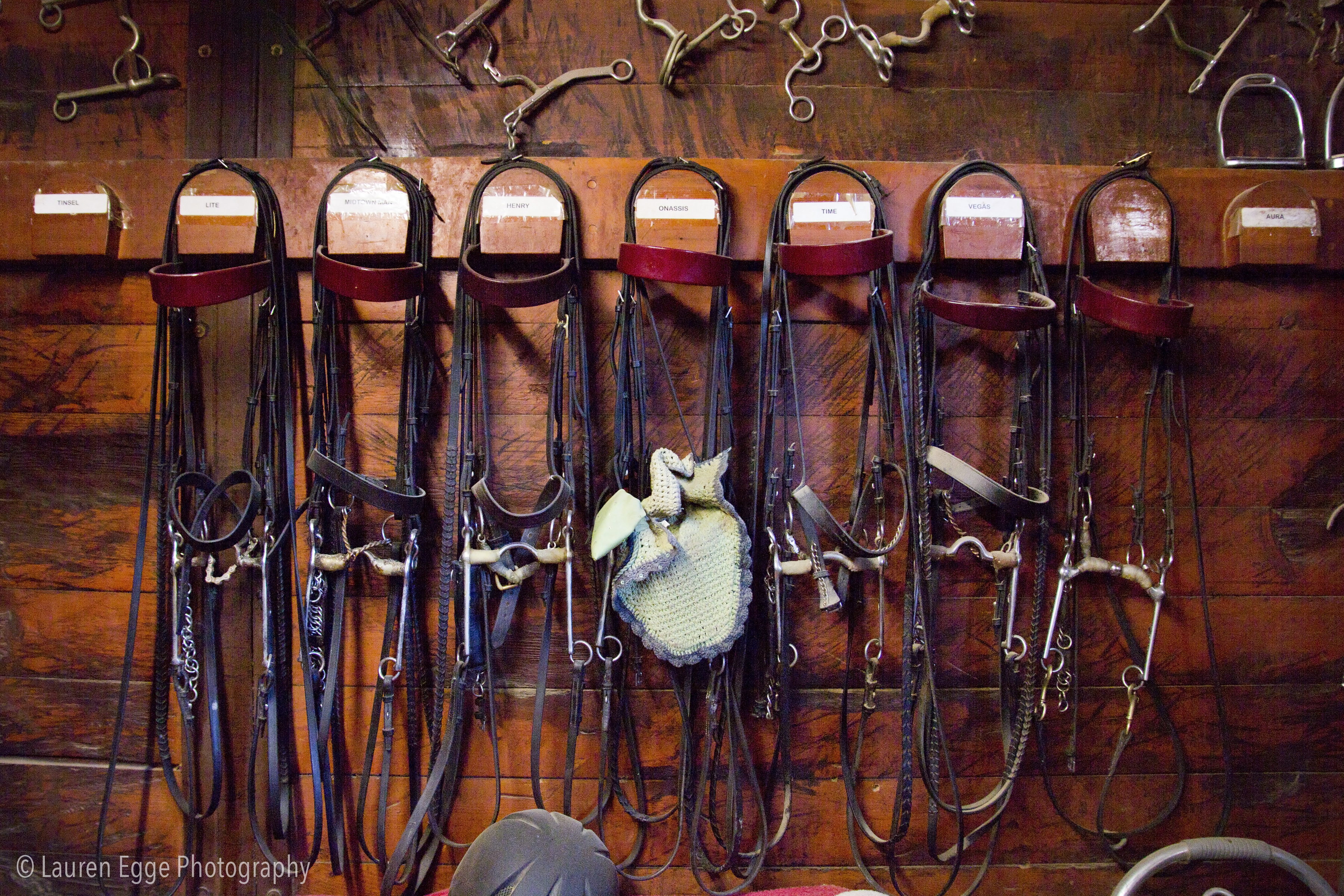 Bridles for days!