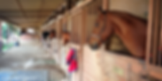 Bennett farms, los angeles equestrian center, laec, burbank, horse, riding, horseback, lessons, boarding, stables, stall, barn, equine, american saddlebred, horse head, barn aisle
