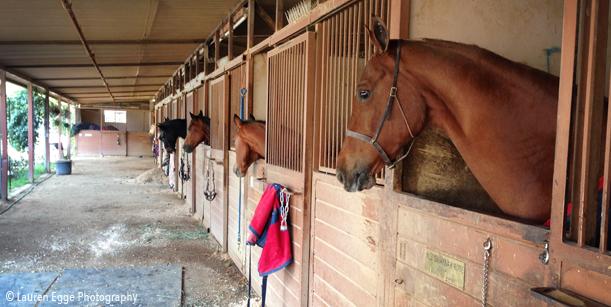 Bennett farms, los angeles equestrian center, laec, burbank, horse, riding, horseback, lessons, boarding, stables, stall, barn, equine, american saddlebred, horse head, barn aisle