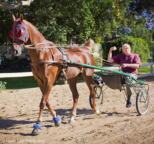 american saddlebred, saddle seat, saddleseat, horse, horse lessons, horse driving, horse cart, Los Angeles, Equestrian center, driving lessons, Jim Bennett, Bennett Farms