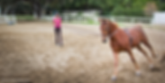 Jim bennett farms, los angeles equestrian center, horse, riding lessons, canter, horse training, lead line, lunging, trainer, saddle seat, american saddlebred, mare, barn, burbank, pony