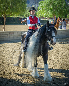 Gypsy, horse, for sale, los angeles, Bennett Farms, black, gelding, horse breed, sale, western, saddle seat,