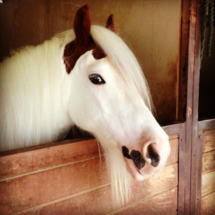 Bennett farms, los angeles equestrian center, laec, burbank, horse, riding, horseback, lessons, boarding, gypsy cobb, pony, stall, stables, barn