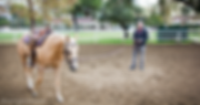 Bennett Farms, Jim Bennett, Los angeles Equestrian center, los angeles, horse, lessons, horseback riding, western, saddle, american quarter horse, horse training, burbank, equestrian, equine, horse trainer