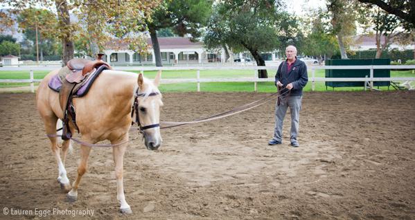 Bennett Farms, Jim Bennett, Los angeles Equestrian center, los angeles, horse, lessons, horseback riding, western, saddle, american quarter horse, horse training, burbank, equestrian, equine, horse trainer