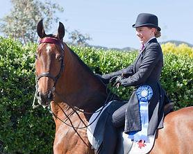 Horse, Saddlebred, Blue Ribbon, Equestrian, Saddle seat, equitation, rider,