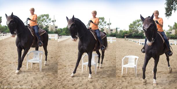 side passing, american saddlebred, western, jim bennett, bennett farms, los angeles, riding lessons, horse, saddle seat, horse training, trail horse, griffith park, laec, black horse, equestrian, la, riding, horseback,