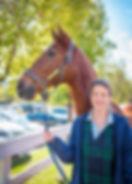 horse, equestrian, bennett farms, chestnut, saddlebred, american saddlebred