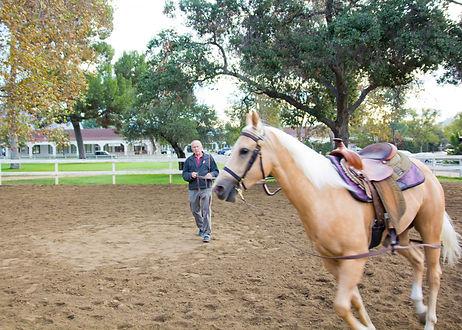 J Bennett Farms, American Quarterhorse, horse training, horse lessons, los angeles