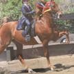 Bennett Farms Remembers Onassis