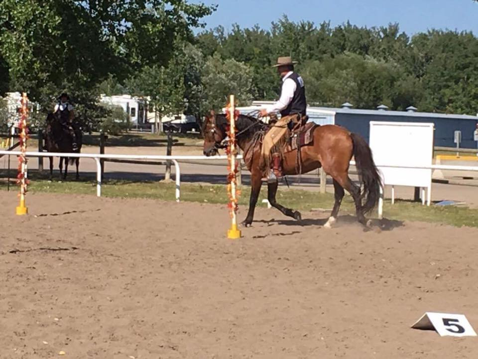Working Equitation Andalusian Nationals