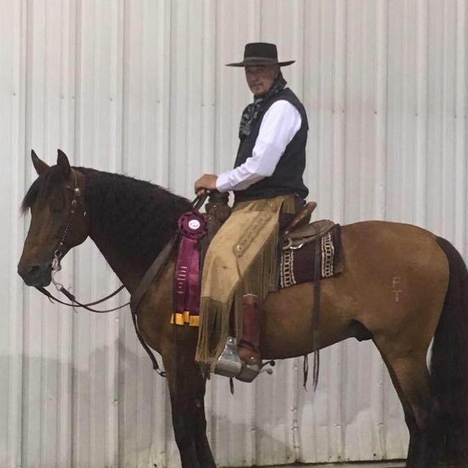 Canadian National Andalusian Show Senior Stallion Class