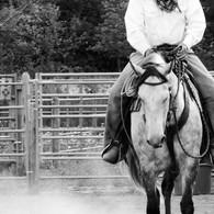 Nico at Horsemanship Clinic Fernie, AB