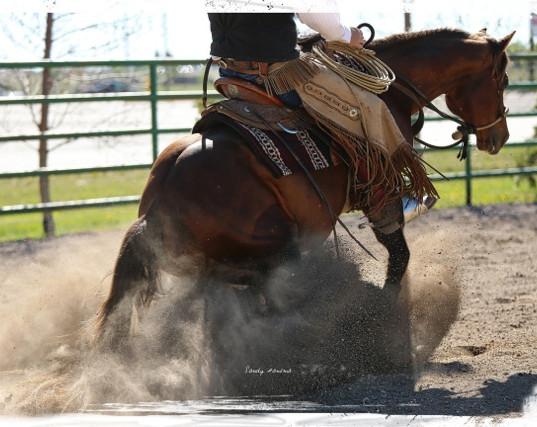 Sliding Stop AQHA Stallion Champ Silverado