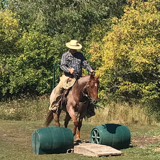 Karl AQHA gelding in for some training