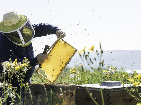 The Buzz about Bee Keeping