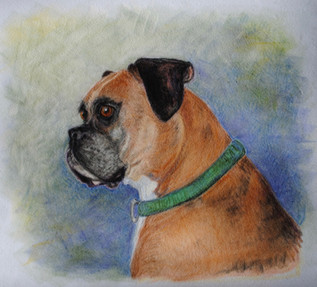 Boxer in green