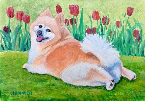 Tulip in the tulips