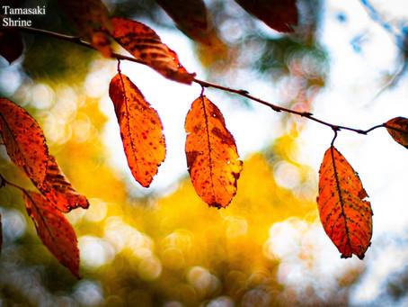 【雑 感】儚くも美しい葉の一生