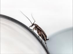 _8014552 insekt bug