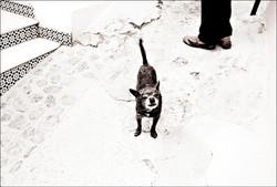 spain b (6)b opp hund spania