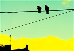 _MG_6561b birds wire