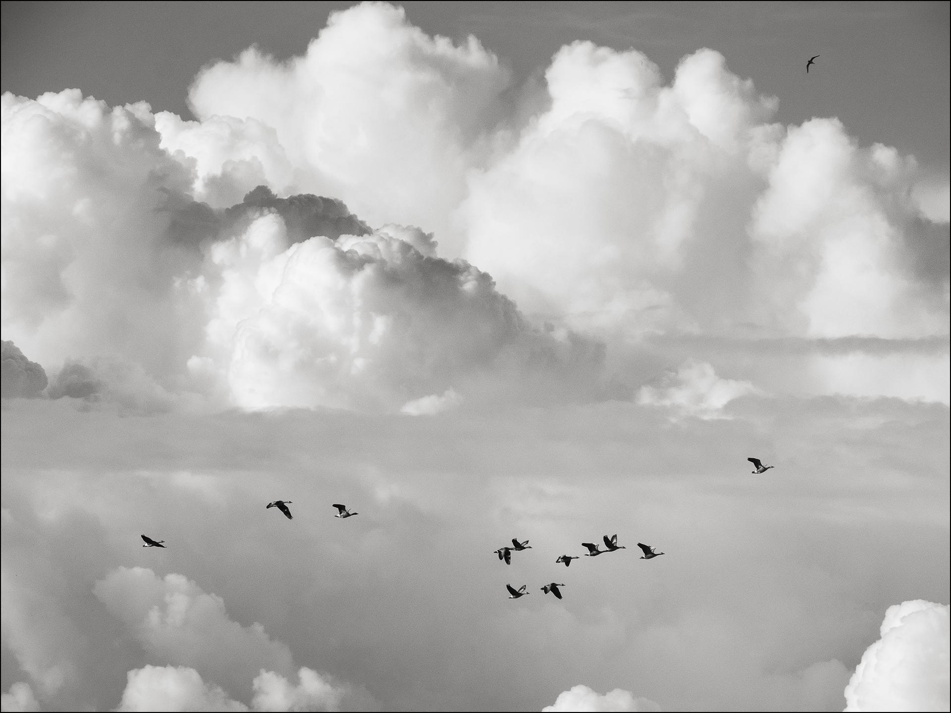 P7150477 hummer 15 birds skies