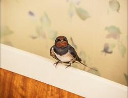 P5240598 hummer 15 fugl