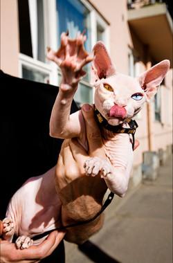 IMG_6933b crazy catt