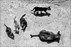 00036 45 prosent hellas karpathos cats 0