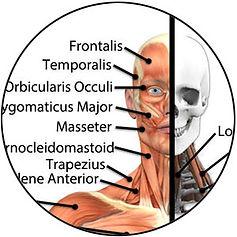 anatomy-online-class.jpg