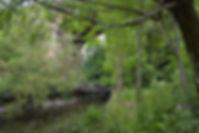 River Brent.jpg