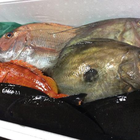 本日入荷の鮮魚の紹介