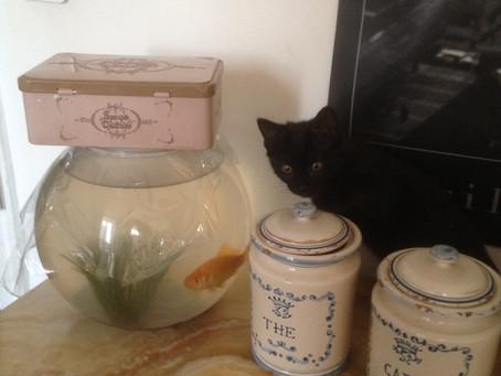 Au chat et à la souris
