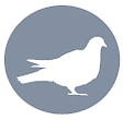 Bird Icon.png