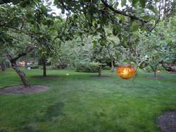 Back orchard