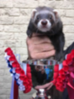 show ferret