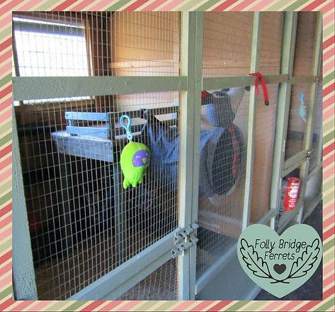 ferret enclosure