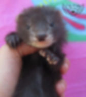 baby angora
