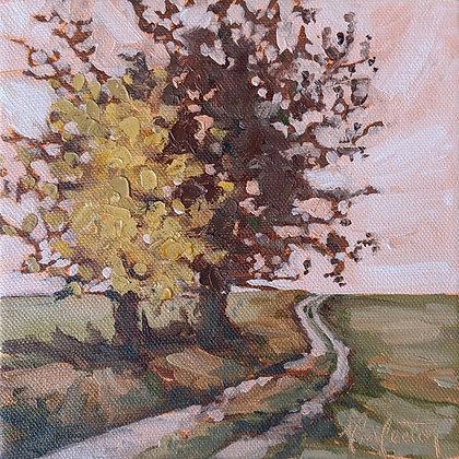 Autumnal Sunshine