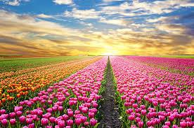 Un conte à méditer : la petite fleur au bout du champ...