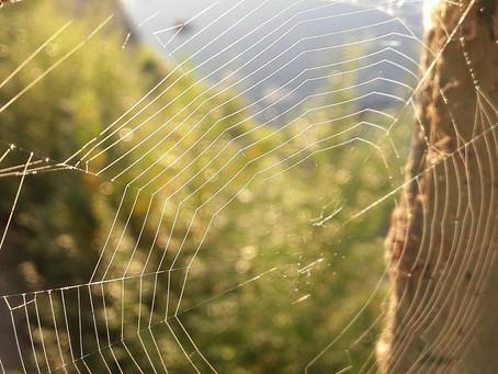 Méditation guidée...                                  La méditation de l'araignée....