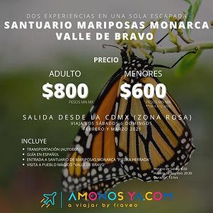 MariposaMonarcaValle.jpeg