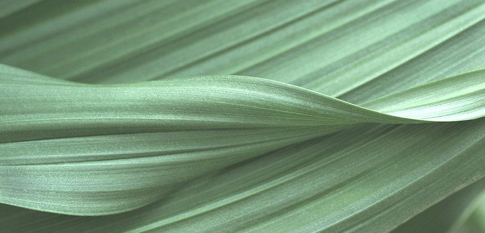 NEW_Leaves1_Edited_edited_edited.jpg