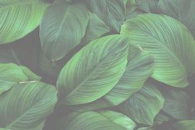 Leaf2_edited_edited_edited_edited_edited