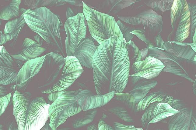 Leaf1_edited_edited.jpg