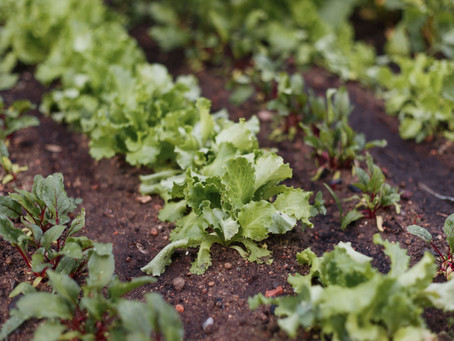 Why You Should Grow Your Own Produce