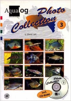 Photo collection 3 - Scholenvissen