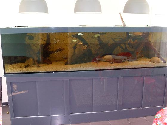 Aquarium met bioloog